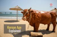 Easy Korean Culture: Korean Age Explained