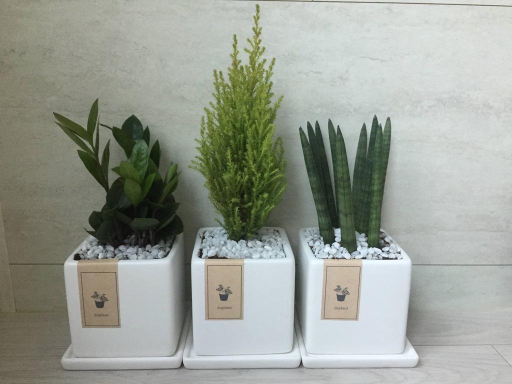 Lingua Asia_Plant Gift_Korea_2021